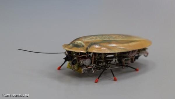 robot kecoa 2