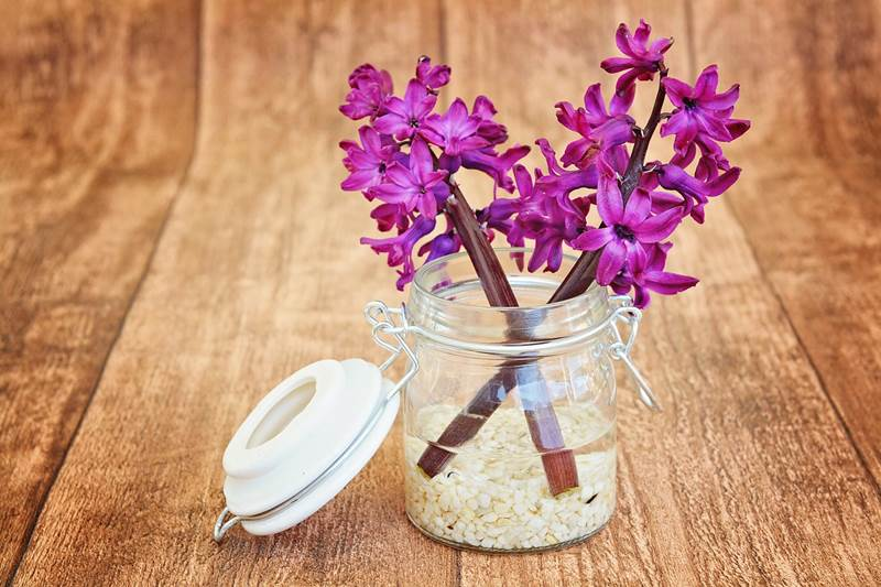 bunga dengan tambahan garam
