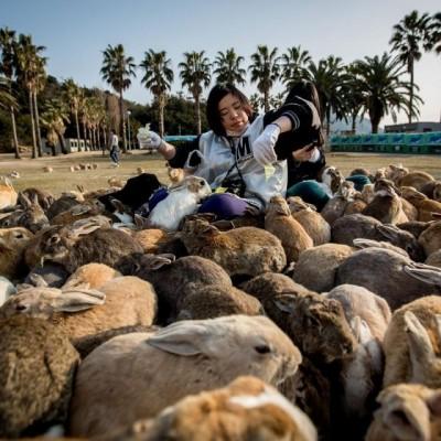 Yuk Kunjungi Pulau Kelinci di Jepang