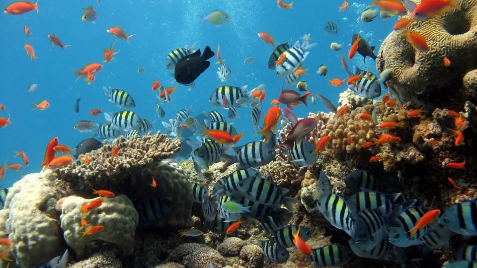 Cari Diving Spot Paling Indah? Indonesia Juaranya!