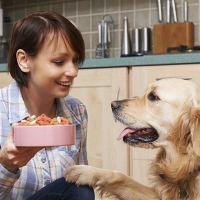 Bahaya, Jangan Berikan Makanan Ini Buat Anjing!