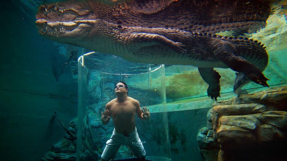 Pacu Adrenalin Dengan Berenang Bersama Buaya Besar