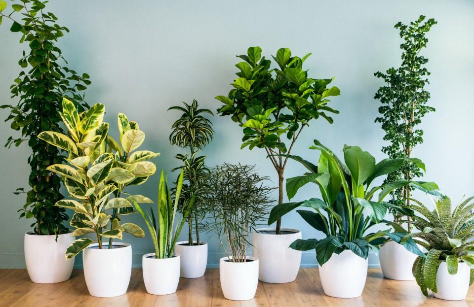 5 Tumbuhan Ini Bikin Udara Lebih Sehat!