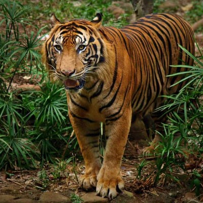 Tragis, 7 Fauna Indonesia Ini Terancam Punah!