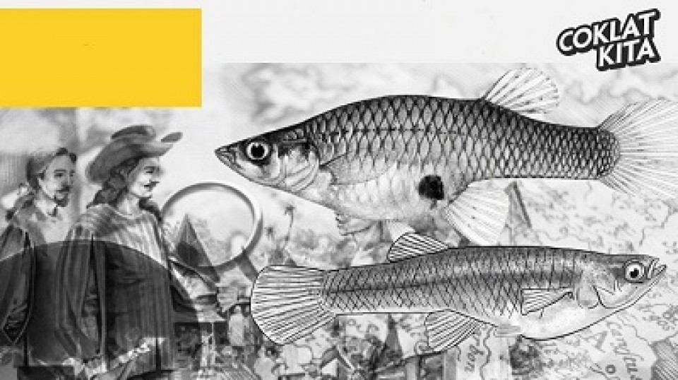 Impun, Si Million Fish Yang Bukan Asli Indonesia
