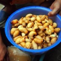 Ini Dia Makanan Khas dari Ulat Sagu