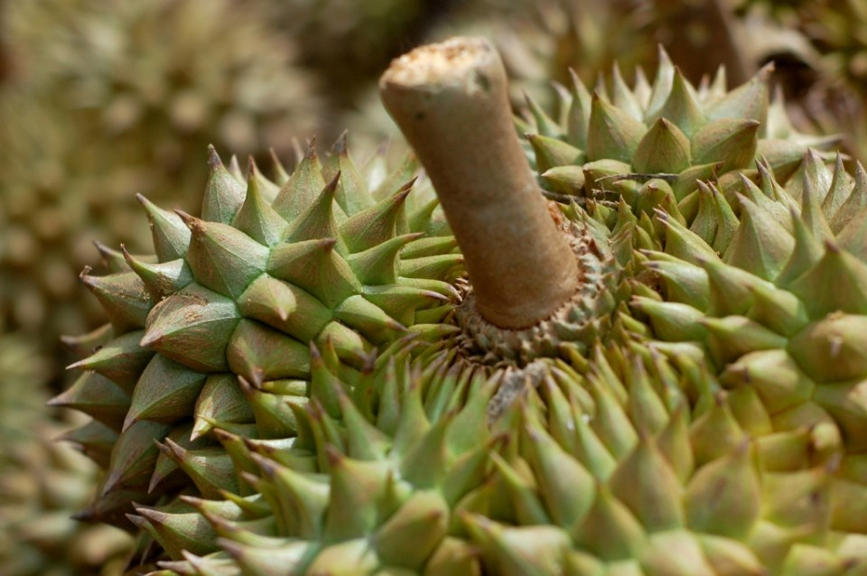 Tips Memilih Durian The King of Fruit