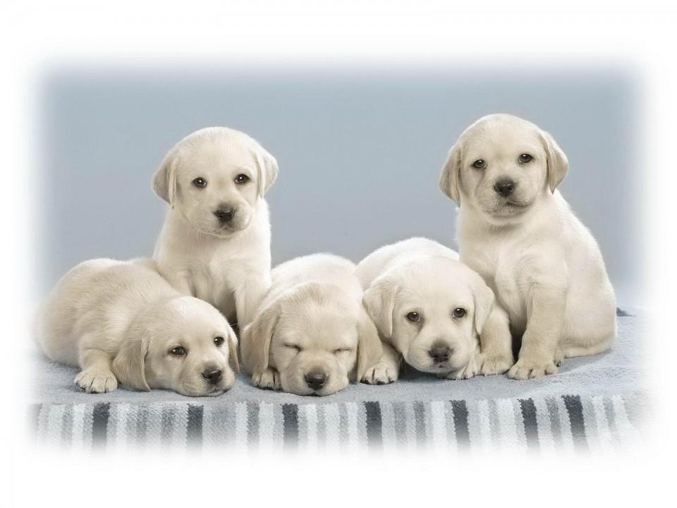 Gaji Ratusan Juta Dari Cicip Makanan Anjing